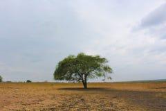 Één boom het één leven stock foto's