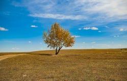 Één boom onder de blauwe hemel Stock Afbeeldingen