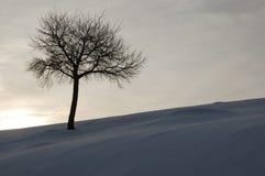Één boom op de winterachtergrond stock afbeeldingen