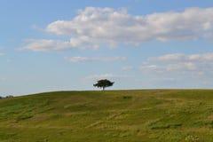 Één boom op een gebied stock foto