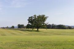 Één boom op een grasgebied Royalty-vrije Stock Foto's