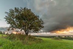 Één boom op een schuin gebied Stock Afbeelding