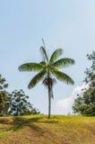 Één boom op het gebied Stock Afbeelding