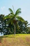 Één boom op het gebied Stock Afbeeldingen