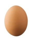 Één bruin die ei op witte achtergrond wordt geïsoleerd Stock Foto