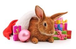 Één bruin konijn in een Kerstmishoed met giften stock afbeelding