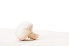 Één champignonpaddestoel Royalty-vrije Stock Afbeeldingen