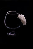 Één chrysantenbloem in het wijnglas Royalty-vrije Stock Afbeelding
