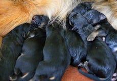 Één dag oude puppy! royalty-vrije stock foto's
