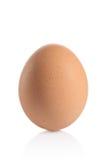 Één dierlijk ei stock foto