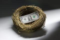 Één dollarrekening binnen het nest van een vogel stock foto's