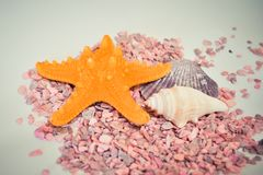 Één of een reeks van verscheidene verschillende shells en zeester op kleine roze stenen Royalty-vrije Stock Foto