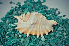 Één of een reeks verscheidene verschillende shells op groene stenen Stock Fotografie