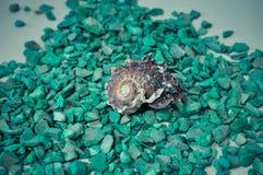 Één of een reeks verscheidene verschillende shells op groene stenen Royalty-vrije Stock Fotografie