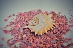 Één of een reeks verscheidene verschillende shells op kleine roze stenen Stock Afbeeldingen