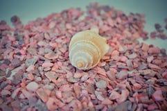 Één of een reeks verscheidene verschillende shells op kleine roze stenen Royalty-vrije Stock Afbeeldingen