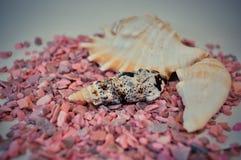Één of een reeks verscheidene verschillende shells op kleine roze stenen Stock Afbeelding