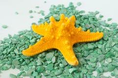 Één of een vastgestelde zeester op groene stenen Stock Afbeelding