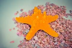Één of een vastgestelde zeester op kleine roze stenen Stock Foto's