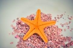 Één of een vastgestelde zeester op kleine roze stenen Royalty-vrije Stock Foto's