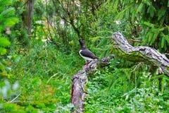 Één eenzame vogel in dierentuin in Duitsland royalty-vrije stock foto