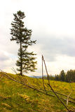 Één enkele boom Stock Afbeelding