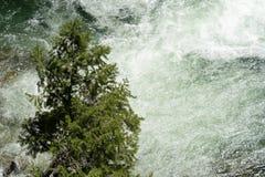 Één enkele eenzame boom bevindt zich door snelle wateren van de Dagger Falls-waterval in Frank Church Wilderness van Idaho te ren stock afbeelding