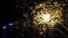 Één enkele gele lantaarn glanst bij nacht onder de takken van een boom stock footage