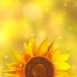 Één enkele zonnebloem op een gele achtergrond Stock Afbeelding