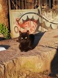 Één enkele zwarte kat op een steen royalty-vrije stock fotografie