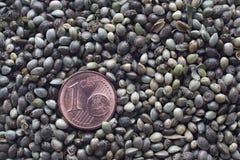 Één eurocentmuntstuk op een hennepzaden Stock Foto