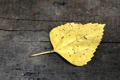 Één geel blad Royalty-vrije Stock Foto