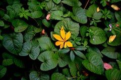 Één Geel bladmidden op de vele groene types doorbladert landschapsachtergrond royalty-vrije stock afbeeldingen