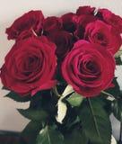 Één geheugen vele rozen stock afbeelding
