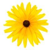 Één gele bloem Stock Afbeelding
