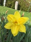 Één gele bloem Royalty-vrije Stock Afbeelding