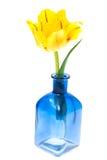 Één gele Tulp in vaas Stock Foto