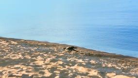 Één Gray Crow Walking On The-Strand dichtbij het Water royalty-vrije stock foto
