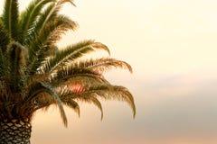 Één grote palm bij zonsondergang met zon tussen het de bladeren van ` s Royalty-vrije Stock Afbeeldingen