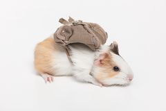 Één hamsterclose-up op wit royalty-vrije stock afbeelding