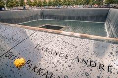 Één herdenkings gele bloem van het wereldhandelscentrum Royalty-vrije Stock Fotografie