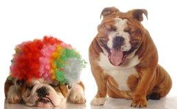 Één hond die bij een andere lacht Royalty-vrije Stock Afbeelding