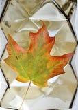 Één hoogtepunt van het Dalingsblad van Vele Kleuren met Geometrische Achtergrond stock foto