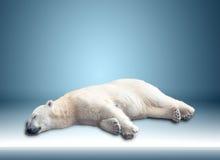 Één ijsbeer stock foto