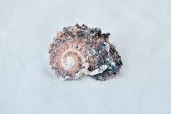 Één interessante shell op wit zand Royalty-vrije Stock Foto's