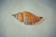 Één interessante shell op wit zand Stock Foto