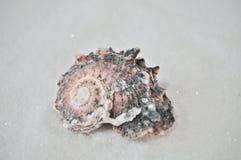 Één interessante shell op wit zand Stock Afbeelding