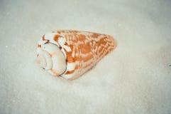 Één interessante shell op wit zand Royalty-vrije Stock Afbeeldingen