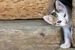 Één jonge leuke kat Stock Fotografie