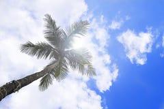 Één kokosnoot Stock Afbeelding